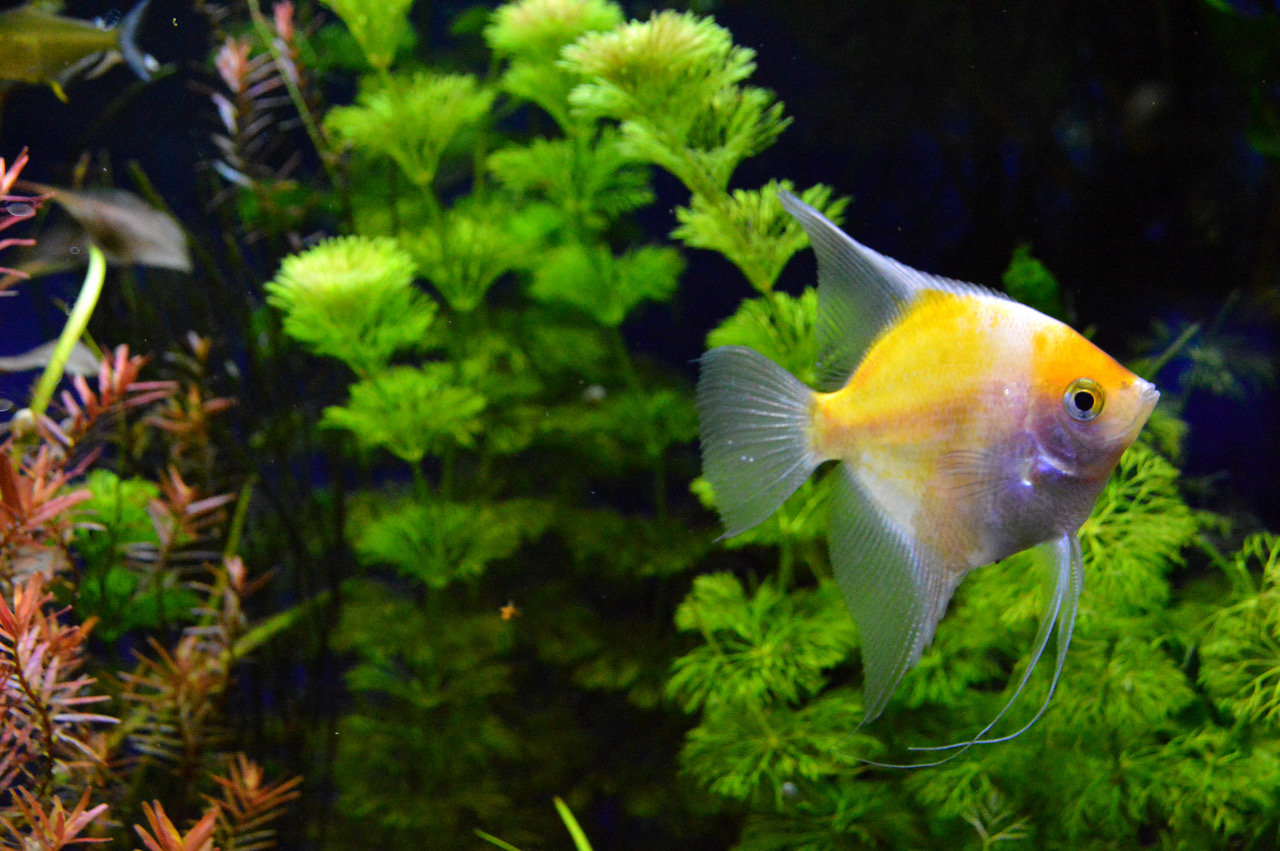tropical fish tank shirley aquatics