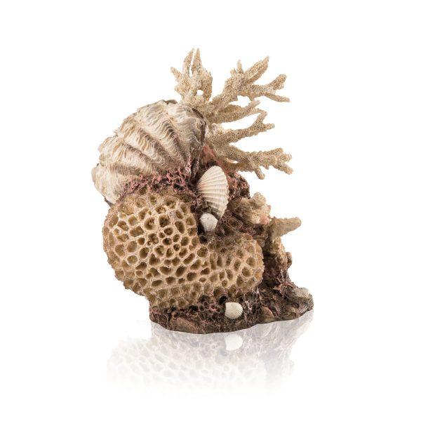 oase biorb aquarium decoration natural coral shell ornament