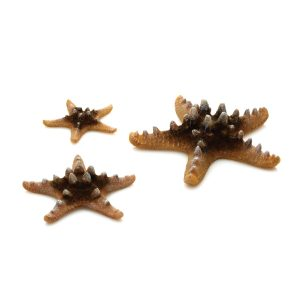 oase biorb aquarium decoration 3 starfish natural