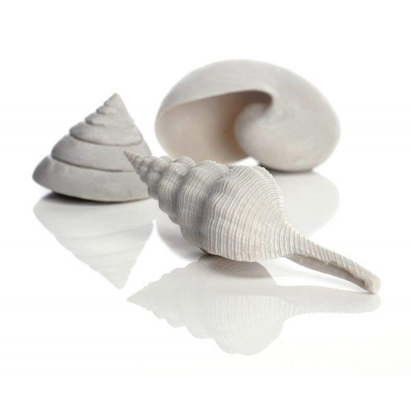 oase biorb aquarium decoration ornamental sea shells natural
