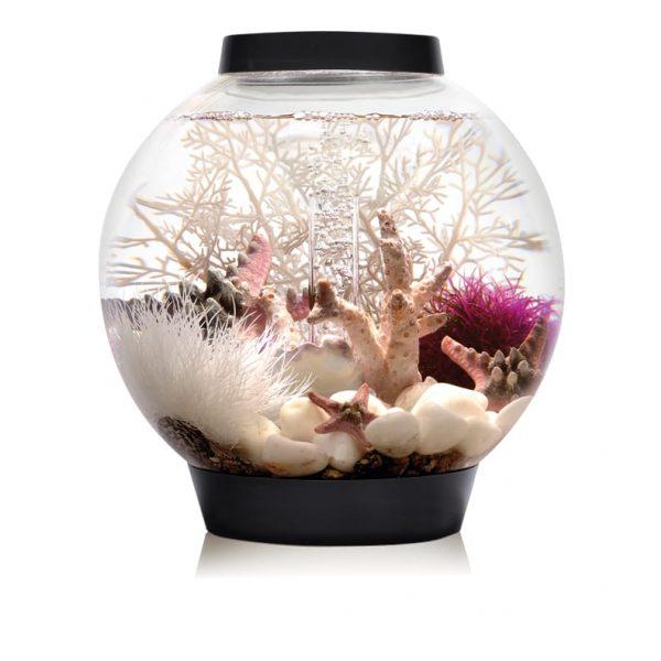 biorb classic black aquarium