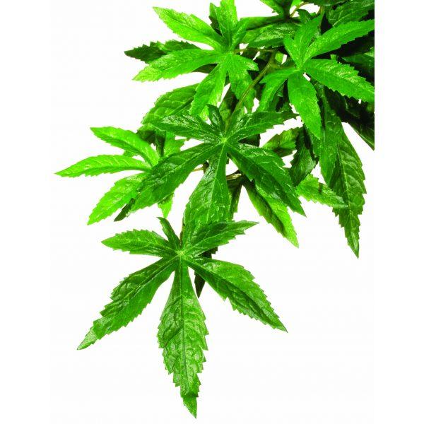 reptile exo terra Abutilon Silk Plant Medium
