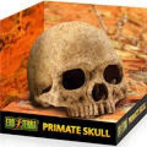 exo terra reptile Primate Skull Ornament
