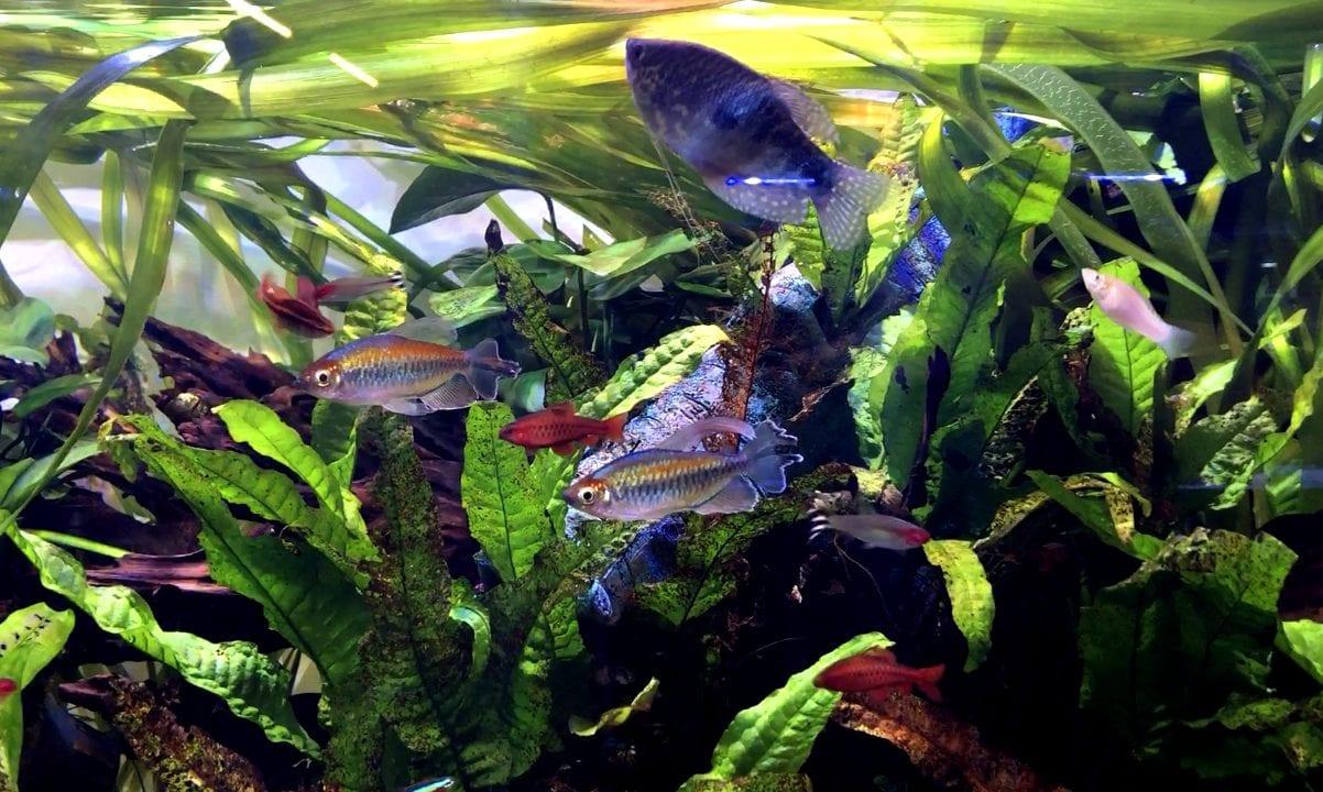 tropical fish tank shirley aquatics
