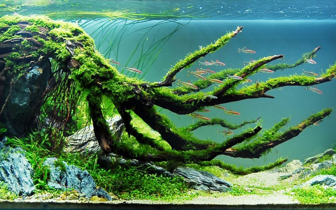 Complete beginners guide to Aquascaping