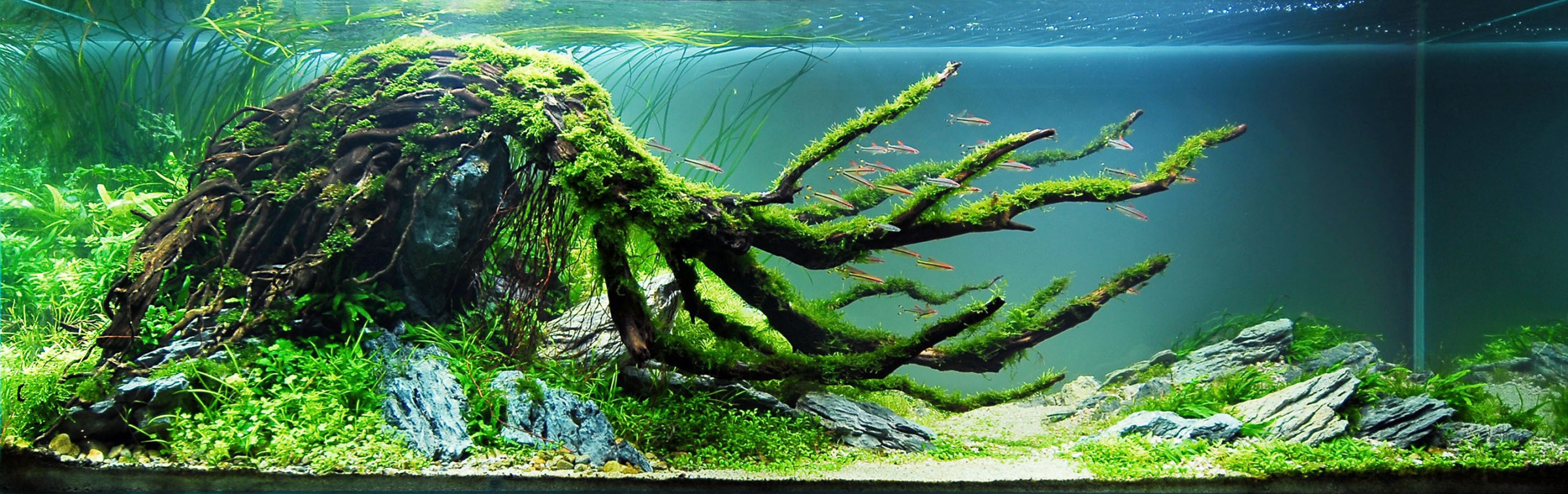 an Aquascape by the late, great Takashi Amano in the nature style that he founded