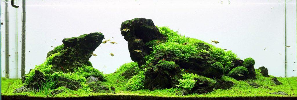 An iwagumi style aquascape