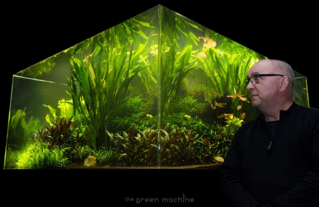 a jungle aquascape designed by James Findley