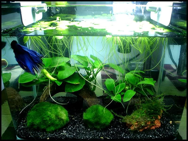 hanging or floating plants being used in an aquascape