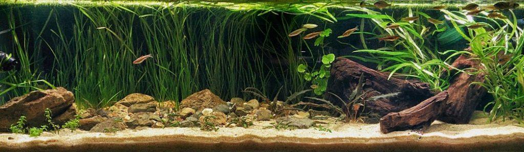a riverbed aquascape